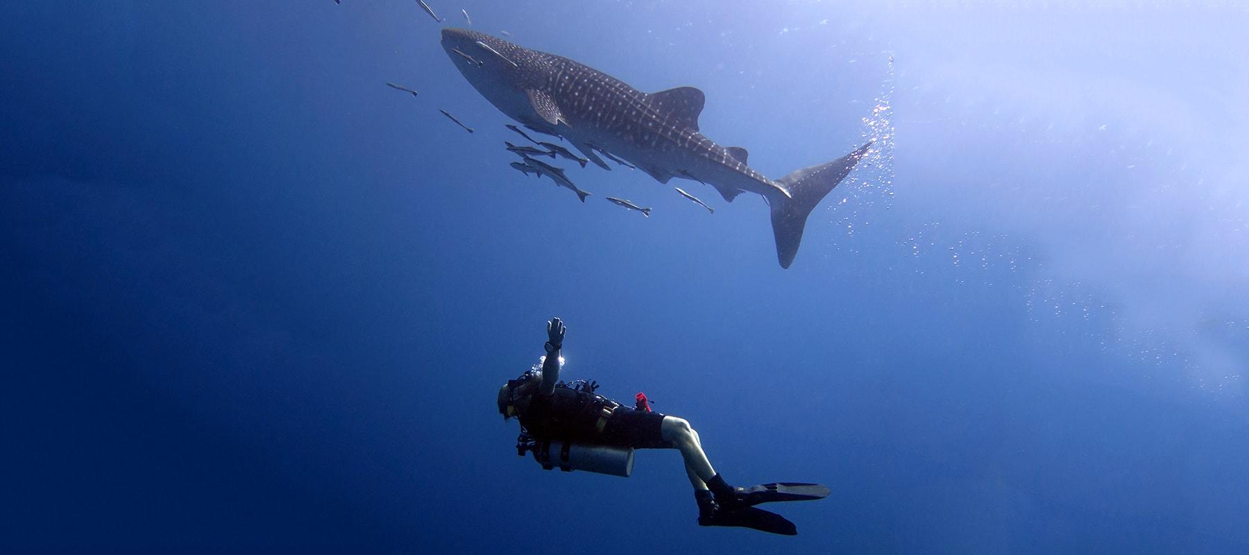 diving-07